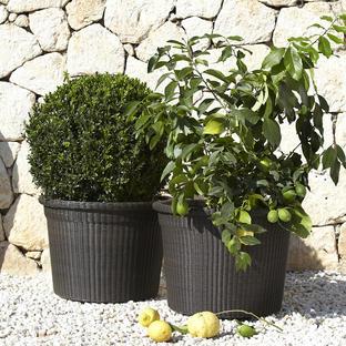 Botanic Large Flower Pots