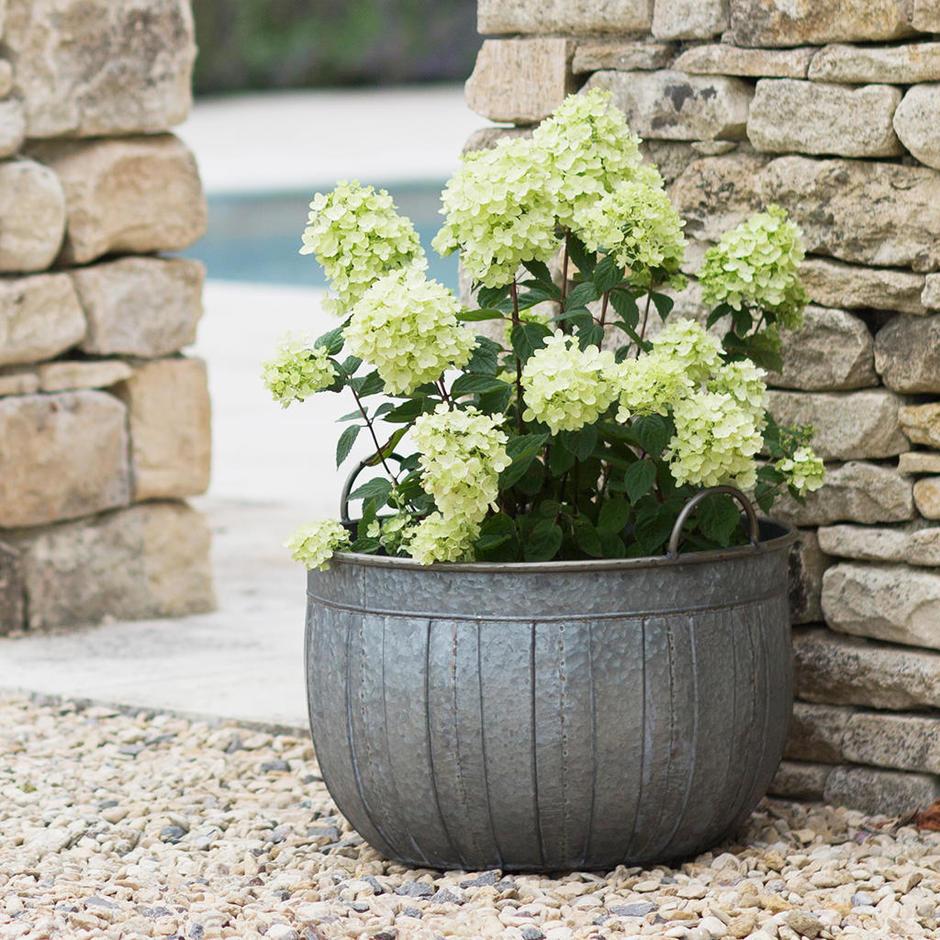 Galvanised Wash Tub Planters