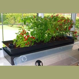 Windowgrow Window Box