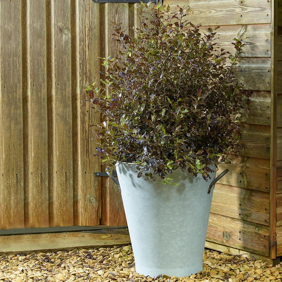 Aged Zinc Tall Planter