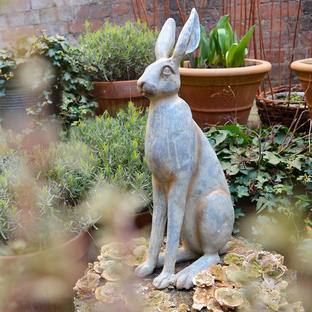 Sitting Grey Hare