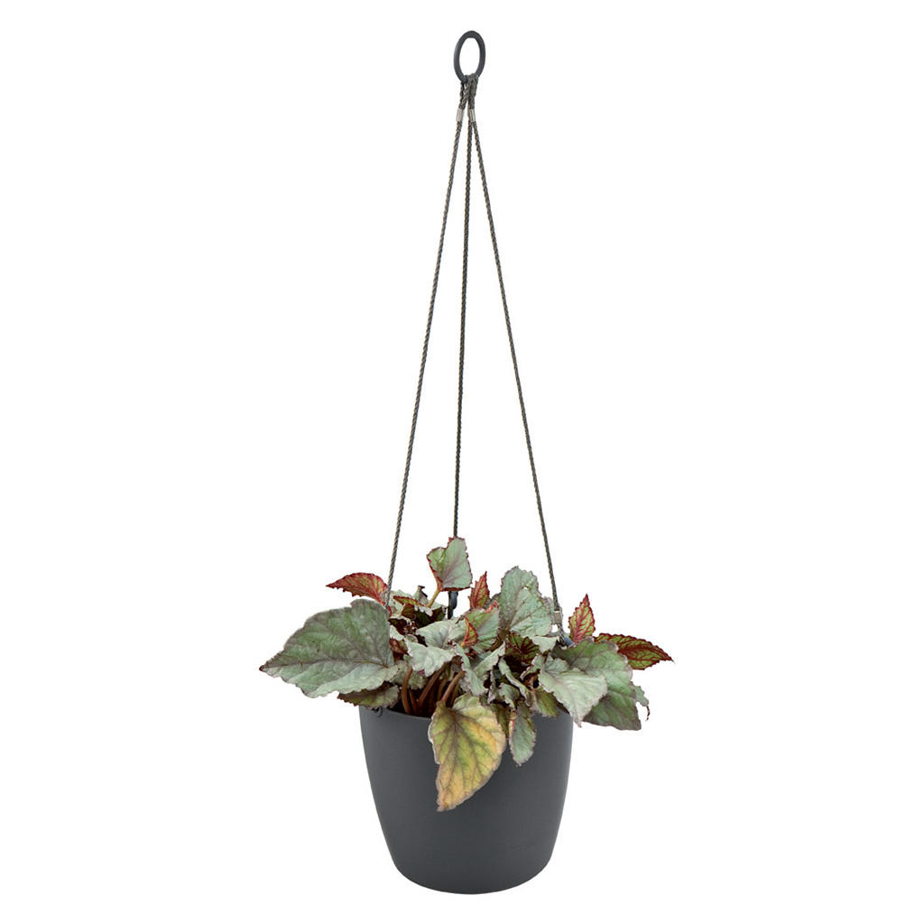 Hanging Planter Urban Hanging Planter The Worm That Turned Revitalising Your