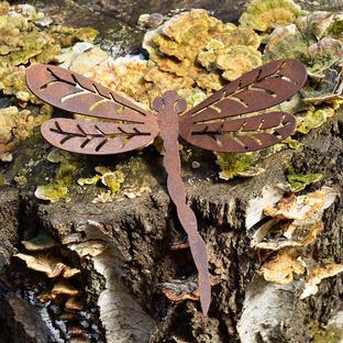 Rusty Dragonfly in Flight