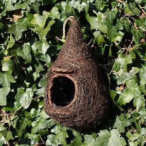 Robin Roosting Nester