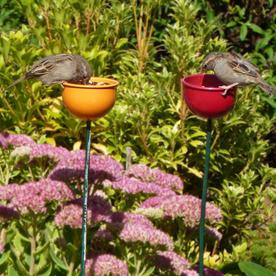 Wild Bird Garden Cup Feeder