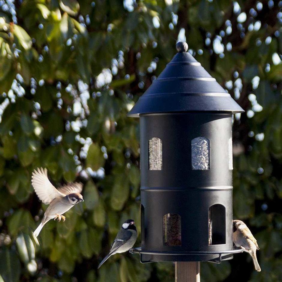 Giant Bird Seed Feeder
