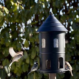 Giant Bird Seed Feeder