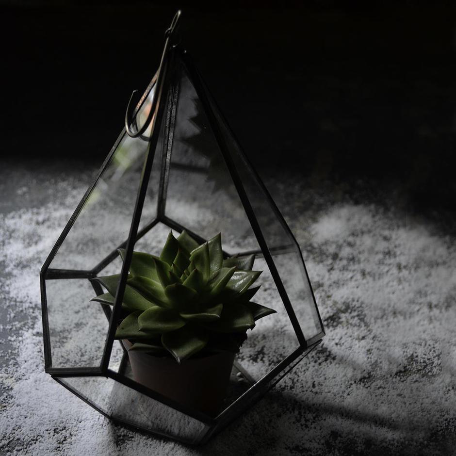 Hanging Terrarium Planter