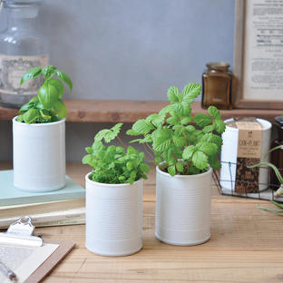 It's a Can of Herbs Grow Kit