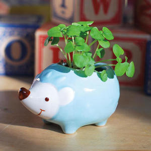 Hedgie the Hedgehog Mini Grow Kit