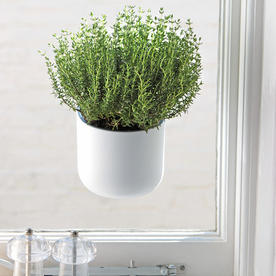 Eden Window Planter