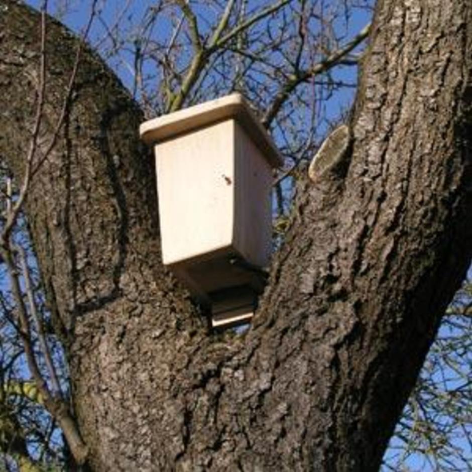 Bat Box - Double Chamber