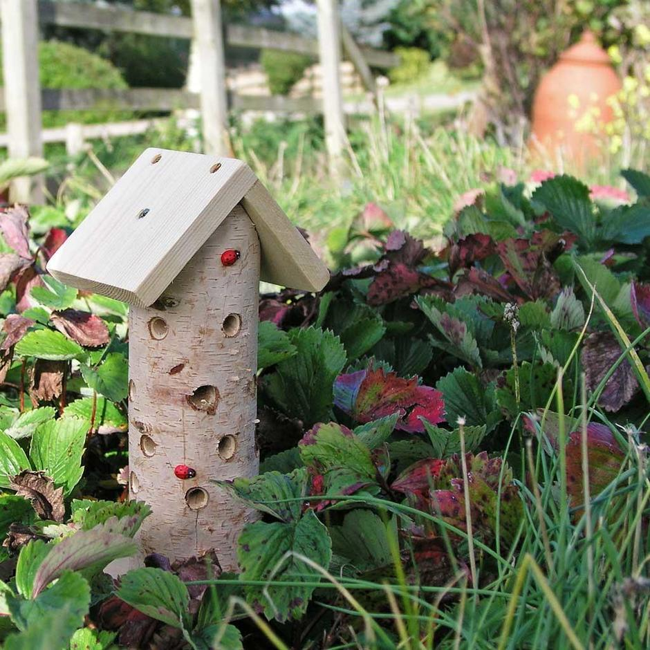 Ladybird and Insect Tower