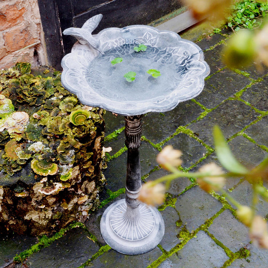 Elegant birdbath with bird