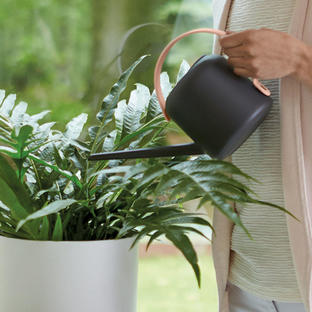 Urban Watering Can