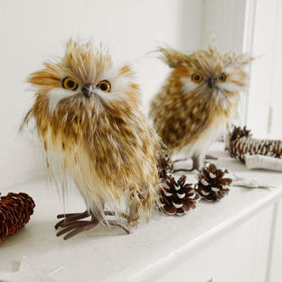 Standing Feather Owls