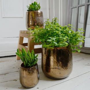 Divine Gold Indoor Plant Pots