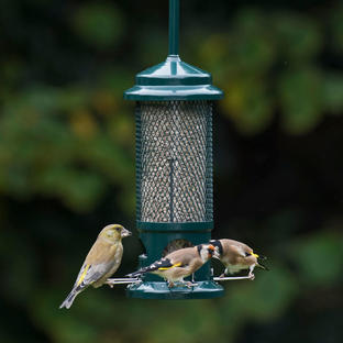 The Squirrel Buster Bird Seed Feeder