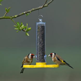 Goldfinch Finder Feeder