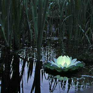 Floating Water Lily Light
