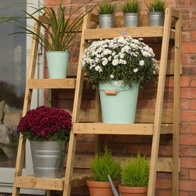 Wooden Ladder Plant Theatre