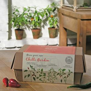 Kew 'Grow your Own' Chilli