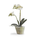 Home_small_twtt-orchid-in-rustic-pot-co