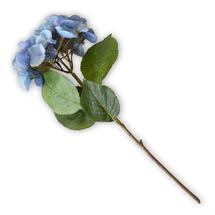 Blue Hortensia Stem