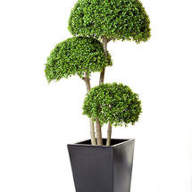 3 Half Ball Faux Boxwood tree