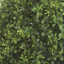 Faux Boxwood Single Ball - 53cm
