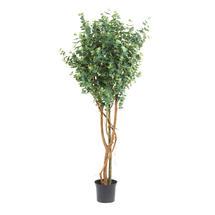 Faux Eucalyptus Tree - 210cm