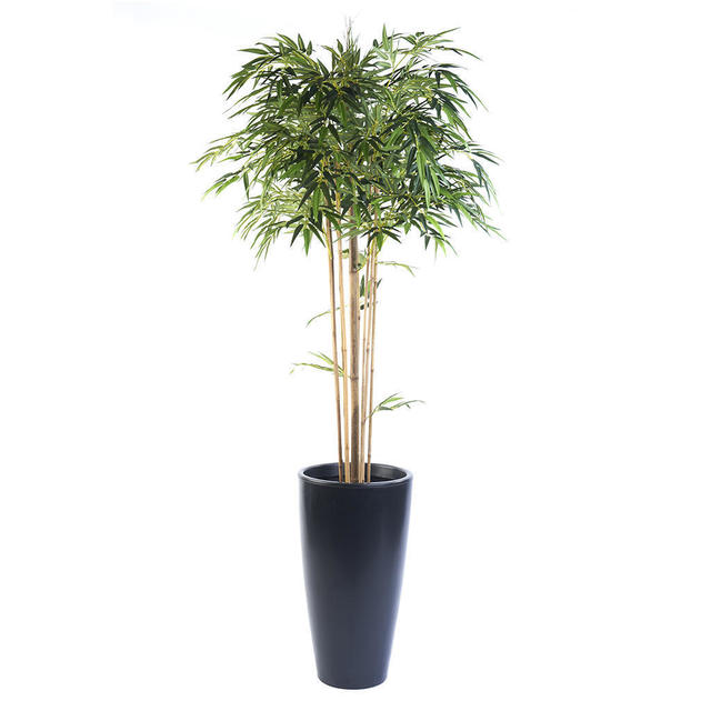 Buy faux bamboo mophead the worm that turned for Faux bambou plante