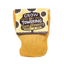 Towering Sunflower
