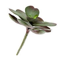 Faux Succulent Plant