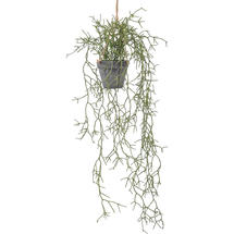 Faux Rhipsalis Cactus Plant in Pot