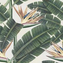 Wallpaper Tropical Bloom