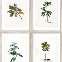 Wallpaper Botany 3 rolls