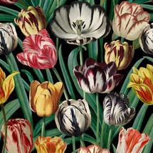 Wallpaper Tulips