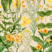 Wallpaper Mimulus