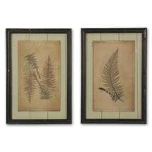 Fern Foliage Botanical Prints - Set of 2