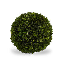 Preserved Topiary Ball 20cm - Medium