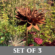 Rusty Passion Flower - Set of 3