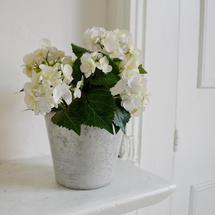 Hortensia Pot
