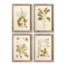 Set of 4 Framed Botanical Prints No7