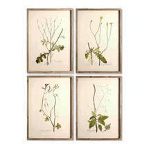 Set of 4 Framed Botanical Prints No8