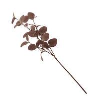 Autumnal Eucalyptus Stem