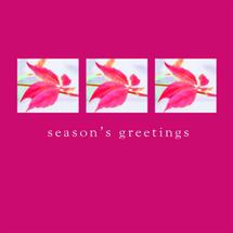 Xmas Card 5pk-Feuille de Noel