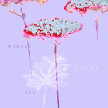 Xmas Card 5pk-Frosted Stems