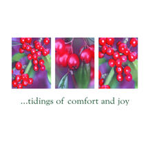 Xmas Card 5pk-Winter Berries