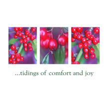 Xmas Card 5pk-Winter Berries